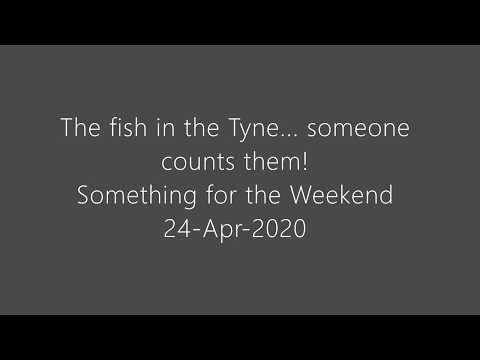 The Fish in the Tyne